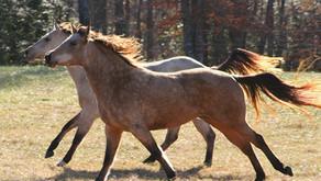 Motor Control in Horses