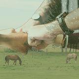 corp_hands (1).jpg
