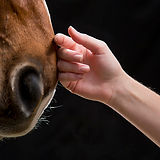 equine-therapy.jpg