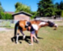 Equine Body Work_edited.jpg