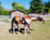 Equine Body Work.jpg