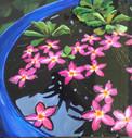Thai Lilies