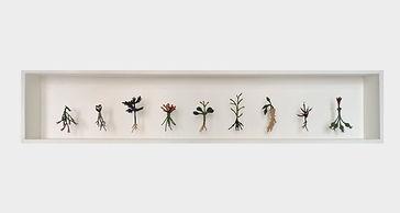 8-herbario de plantas frescas II.jpg