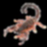 scorpion_edited.png