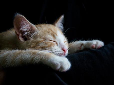 knit.me.cat