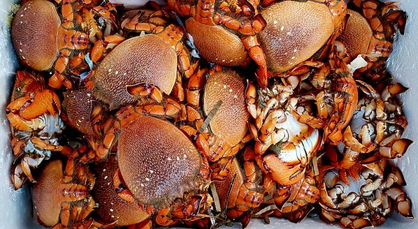 Spanner Crab Tapioca Noodle Soup- Bánh Canh Cua Huỳnh Đế