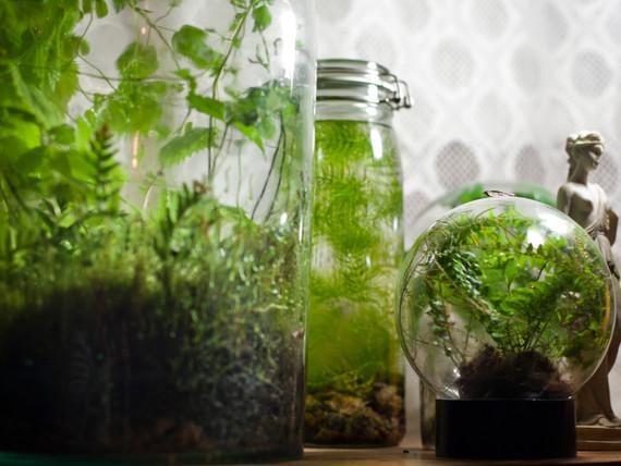 Luonnontila(ekosysteemit).jpg