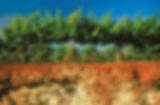 Reschke, WInes, Cabernet, Coonawrra, South Australia, Australia