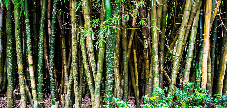 bamboo-forest-hawaii-60877.jpg