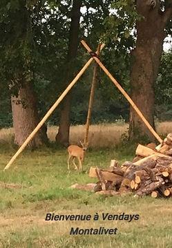 HYB Vendays Bambi