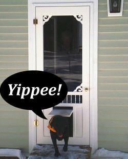 Pet-Doors-Screen-Door-With-Doggy-Door-20