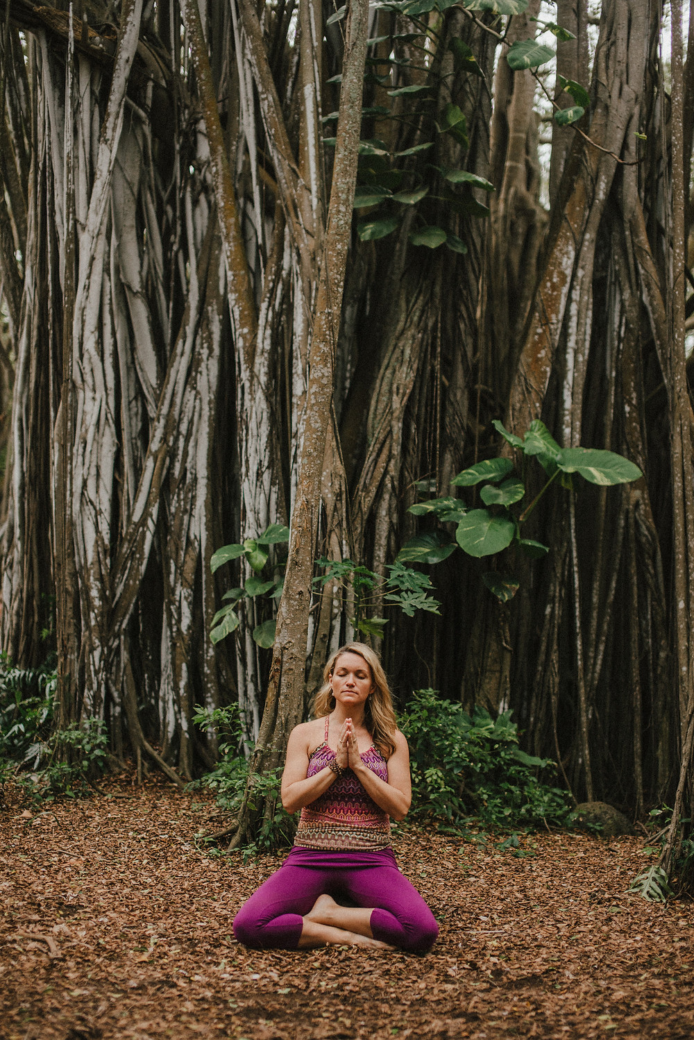 Finding the quiet in the banyan tree