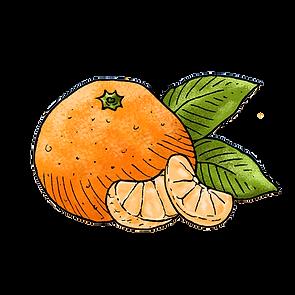 thisisus_illu_mandarinen.png