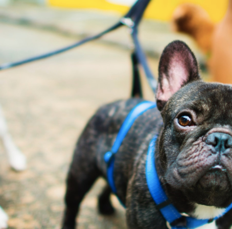 Ten Doggy Date Ideas You've Never Thought Of
