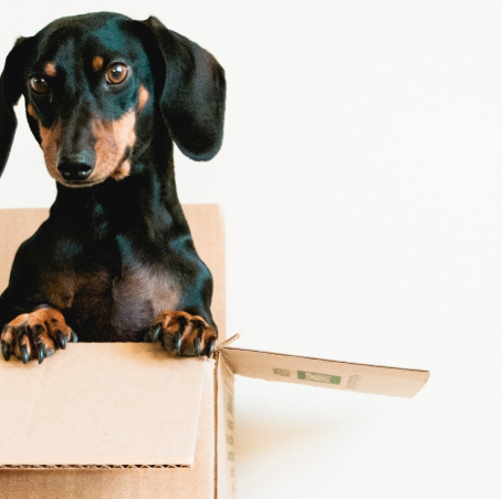 The Monthly Pet Subscriptions Your Dog Needs