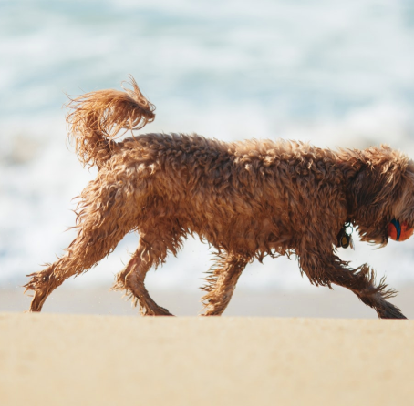 The Best Dog-Friendly Beaches: The Bay Area