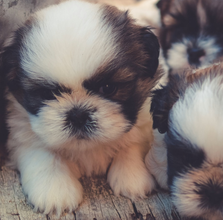 Best Puppy Socials in the Bay Area