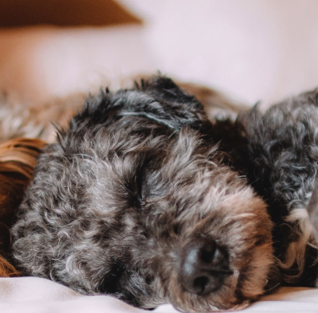 Our Favorite Pet-Friendly Hotels: The Bay Area