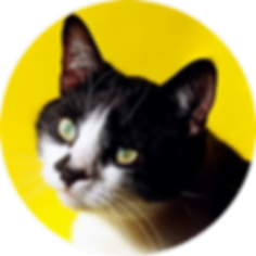 cat_yellow.webp