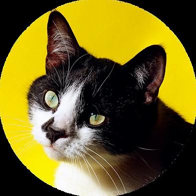 cat_yellow.webp