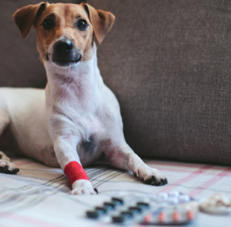 All About Heartworm in Dogs