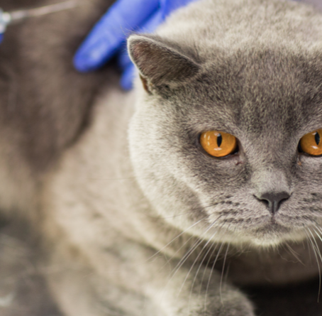 What to Expect After Your Pet Gets Vaccinated