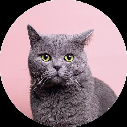cat_pink1.webp