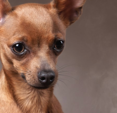 California Wildfire Smoke: Helping Pets Cope
