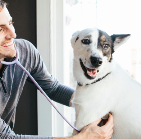 How to Find the Best Vet Near You