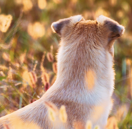 Our Guide to Handling Foxtails