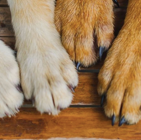 How To Trim Your Pet's Nails