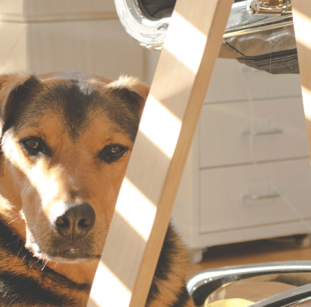 Six Tips To Follow When You Bring Your Dog to Work