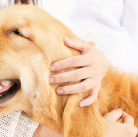 What Vaccines Does My Dog Need?