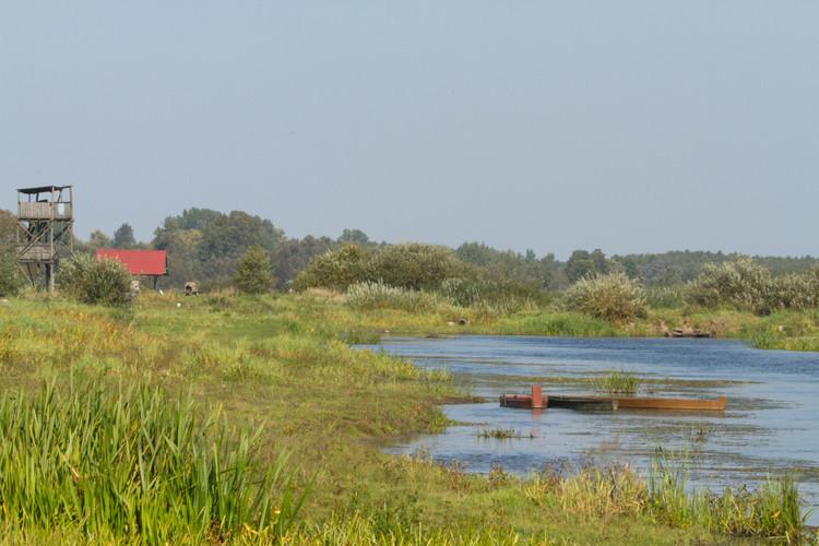Biebrza Marshes.jpg