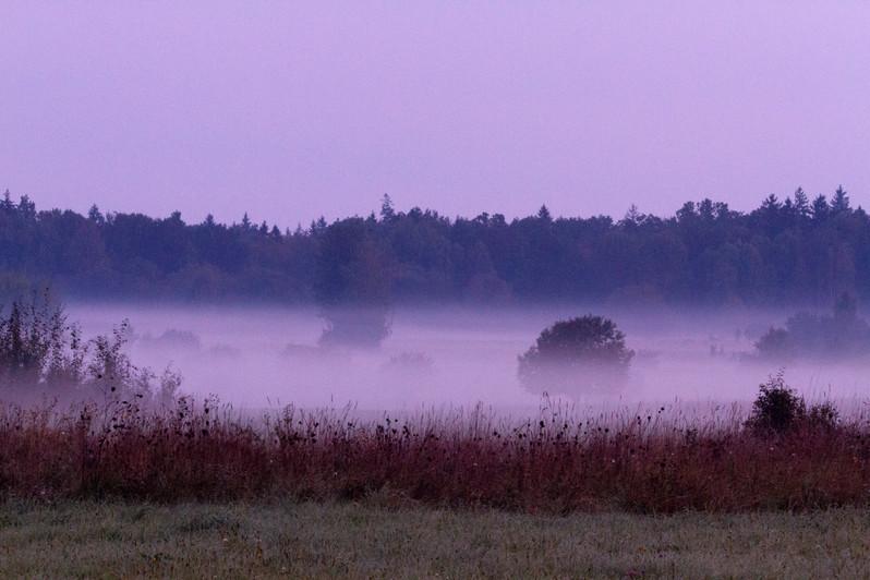 Dawn_in_Białowieża_Forest.jpg