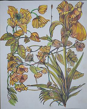 Linda Collura Iris Botanical