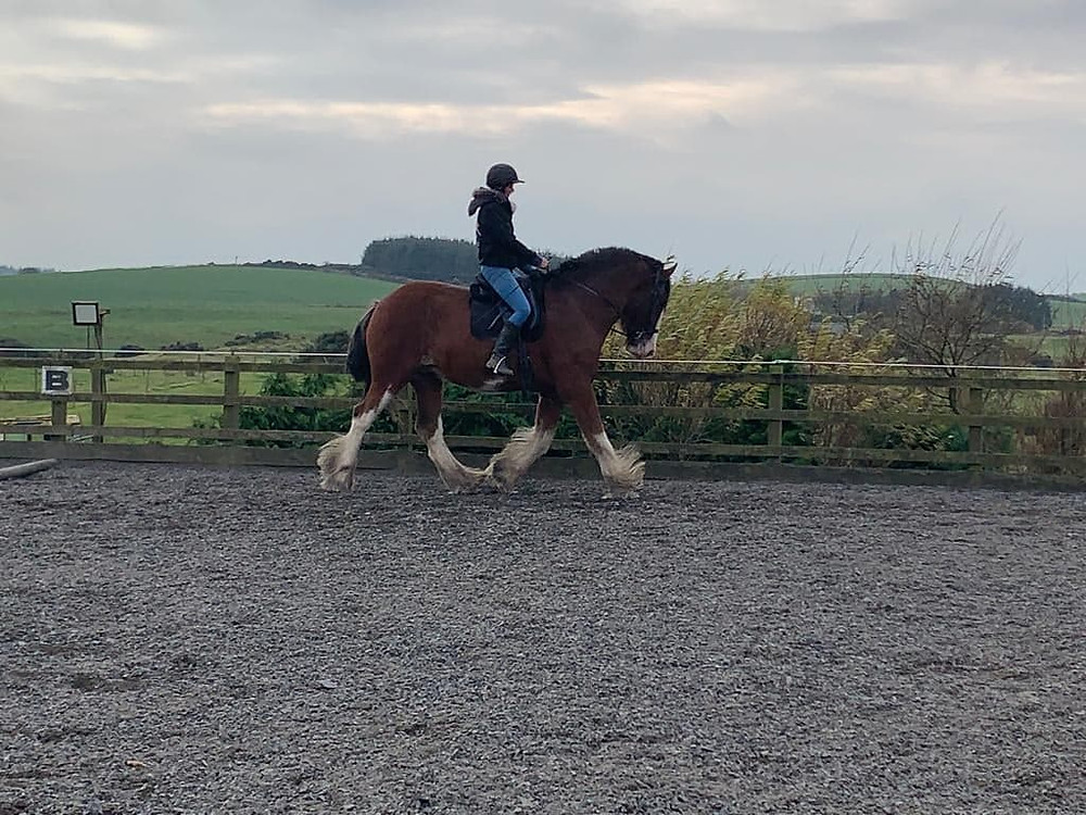 Clydesdale bucking schooling livery