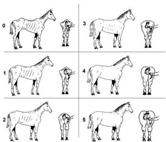 a visual guide for condition scoring your horse