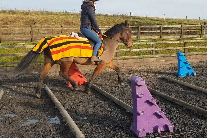 welsh D trotting poles little glengyre