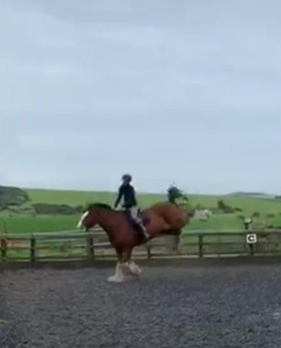 big horse bucking