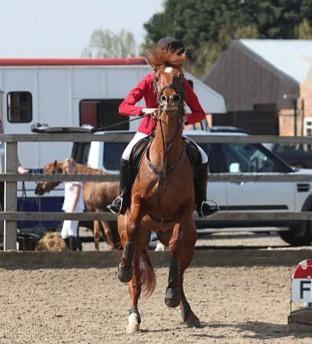rearing horse little glengyre