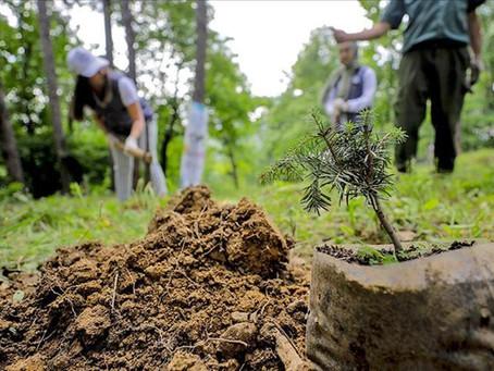 Ağaçlandırmanın Doğaya, Şehirlere ve İnsanlığa Faydası