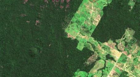 Amazon'daki Orman Katliamını Oturma Odanızdaki Kanepenizden Canlı İzleyebilirsiniz