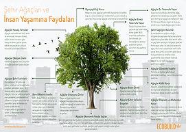 Şehir Ağaçlarının Faydaları-TR kopyası.jpeg