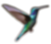 colibri_2.png