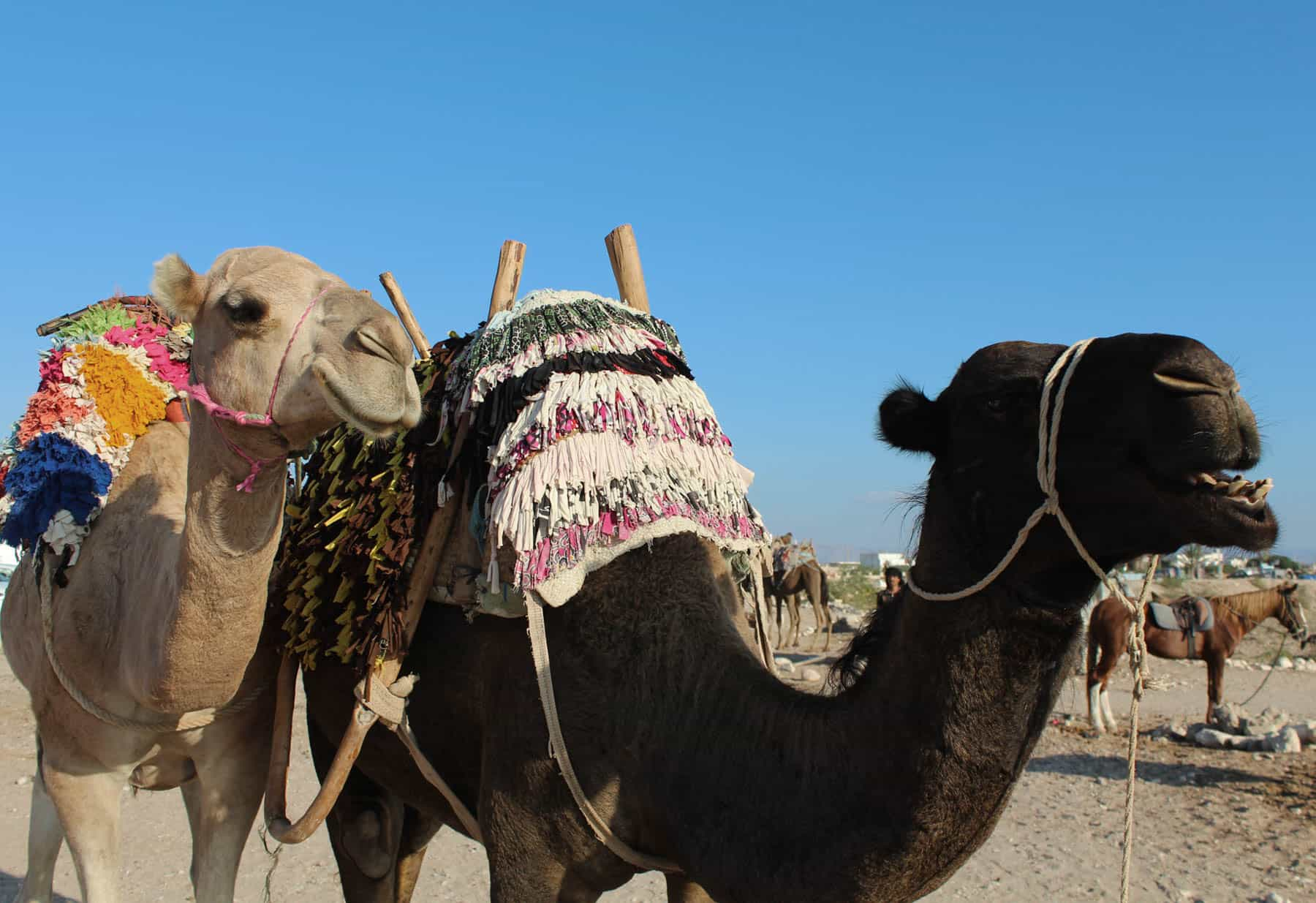 camel-route-detail-blue-waves-morocco