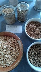 LS grain samples.jpg