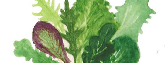 Urban Harvest Salad Mix Seeds