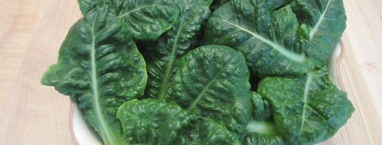 4 Acres Hydroponics Romaine Lettuce