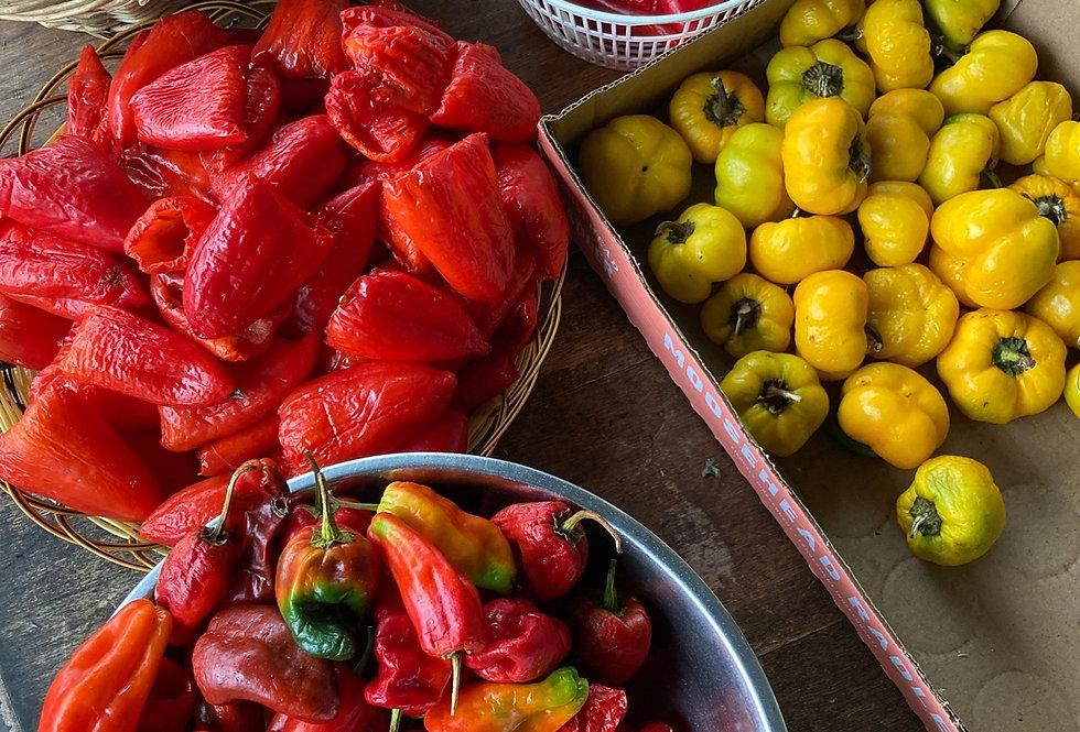 Urban Harvest Hot Pepper Seeds